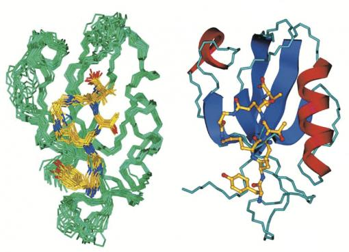Two schematics: CN2097 - The binding of the synthetic compound CN2097 (yellow in these renderings) to the synaptic protein PSD-95 restores healthy neural function in mice with the Angelman syndrome gene mutation.