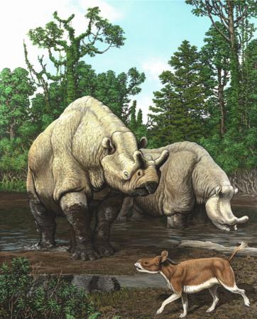 Rhino-like animals - This painting by artist Carl Buell depicts a scene from the late Eocene  of North America. The rhino-like animals in the background are  brontotheres. The pony-sized  Hyracodon, a closer relative of living rhinos, in the foreground.