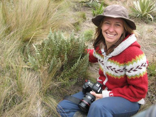 A Grass Solution - Erika Edwards has uncovered the origin of a grouping of grasses that now account for up to one-fifth of the vegetational covering on Earth. Rainfall, not temperature, was the primary trigger around 30 to 40 million years ago.