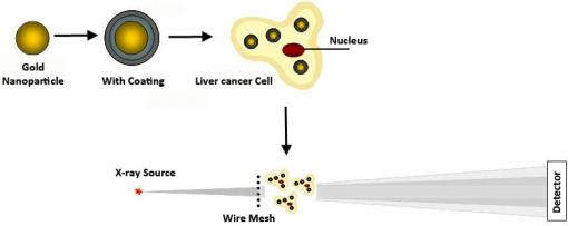 Cancer spotters - A new diagnostic technique can spot tumor-like masses as small as 5 millimeters in the liver. Gold nanoparticles with a polyelectrolyte coating can make smaller tumors more visible through X-ray scatter imaging, enabling earlier diagnosis.