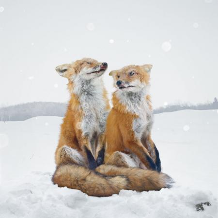 - Simen Johan, Untitled #136  (2006), from the series Until the Kingdom Comes  Digital C-print, 60 x 60 inches