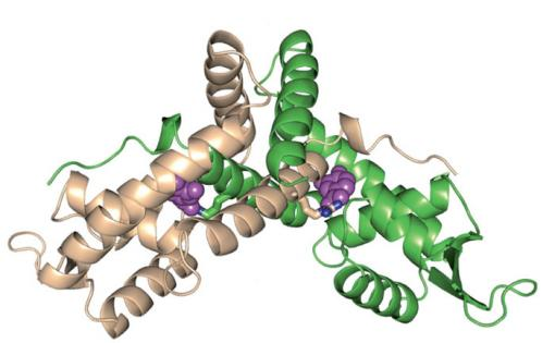 The protein PcaV in the presence of protocatechuate - Digesting lignin, a very stable, plentiful polymer in biomass, is a limiting step in the production of biofuels. Brown researchers have identified a microscopic chemical switch that lets bacteria get to work, breaking lignin down into its component parts.
