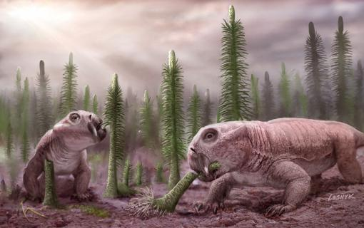 "Survivors - Lystrosaurus, a relative to mammals, was one of a handful of ""disaster taxa"" to escape from the rubble of the Permian Period, along with the meter-high spore-tree Pleuromeia. Low diversity of animals delayed the full recovery of land ecosystems by millions of years."