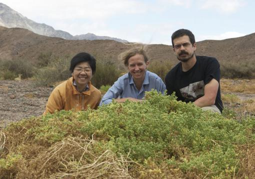 A rapid expansion of available habitat - Researchers Monica Arakaki, Erika Edwards, and Matt Obgurn were hunting for succulent plants in Argentina last February. Finding Halophytum amenghinoi, foreground, an extremely rare succulent relative of cacti, was a major goal of that field trip.