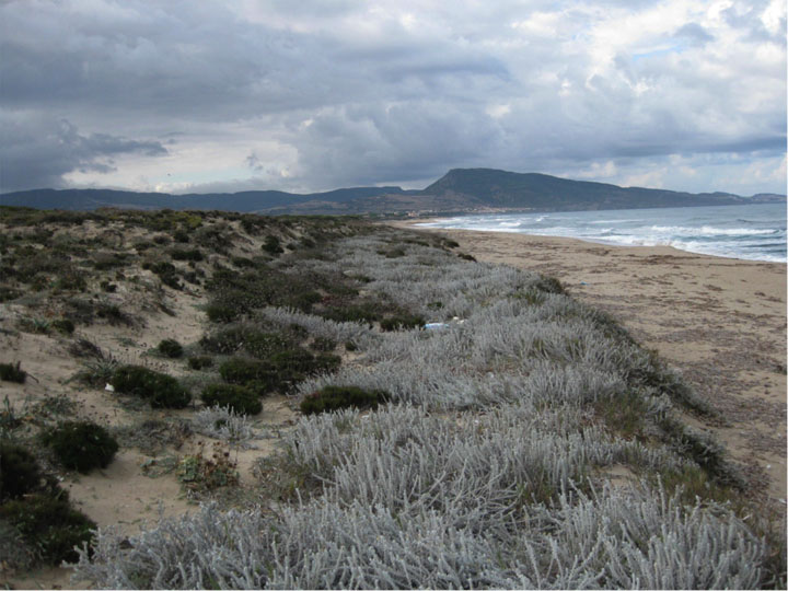 Stress in Sardinian sand dunes: Grasses, trees and shrubs have obvious differences, but in times of stress their communities exhibit less negative competitive pressure and more facilitative, positive interaction.