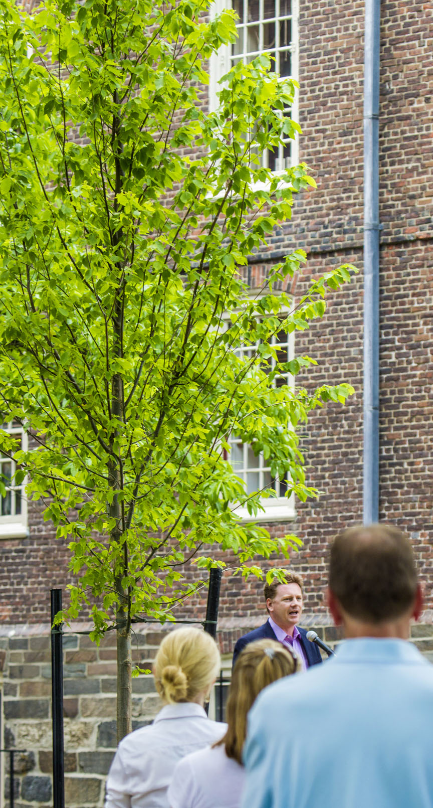Planting Under Elm Trees : Staff gathered thursday afternoon to dedicate a newly planted tree