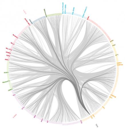 An interactive catalog of genetic mutations - The genetic profile of a given cancer can involve mutations of different genes in different patients. Dendrix, a powerful algorithm, can search enormous datasets for associations of genetic mutations, any one of might cause disease.