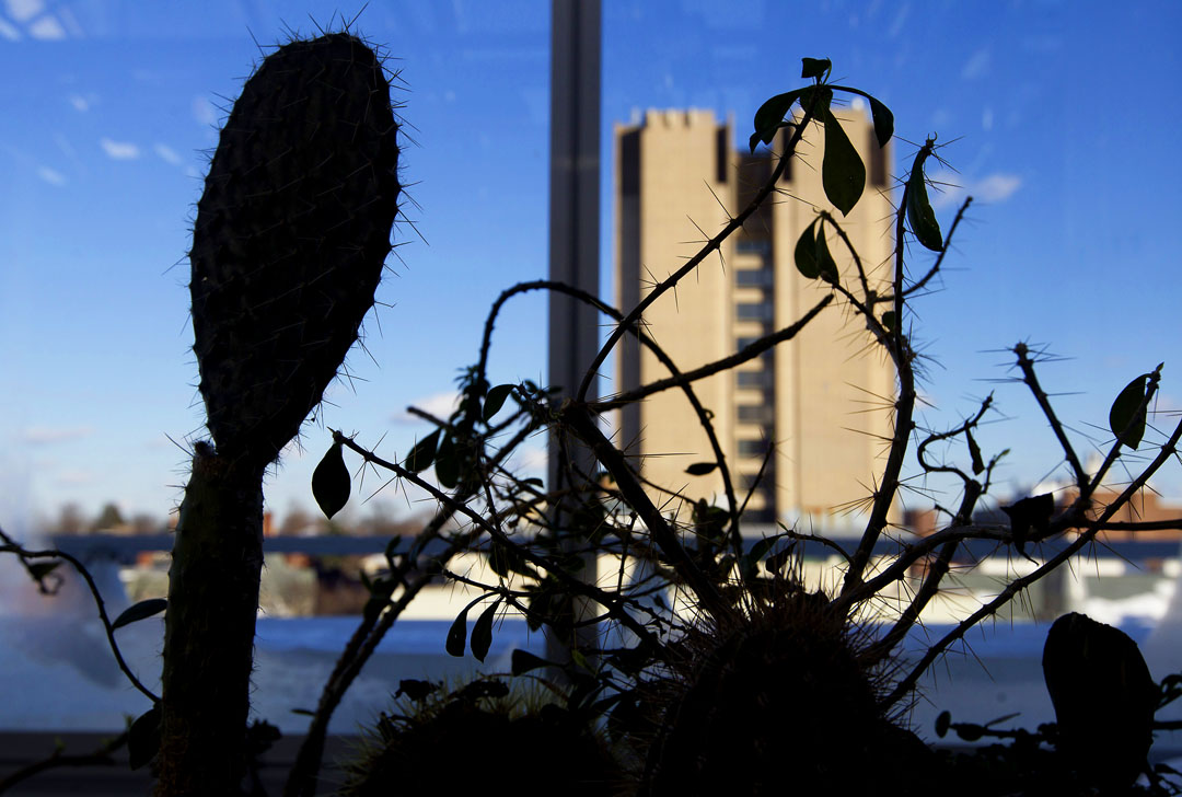 To keep a steady climate: Outside, it's winter. Inside, cacti flourish in hot, dry areas next to areas that can mimic tropics or tundra.