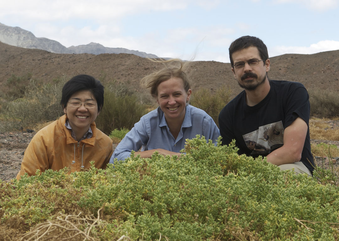 Field work: Erika Edwards (center), Matt Ogburn and postdoc Monica Arakaki found the rare succulent species Halophytum ameghinoi, which has 3-D venation, on a collecting trip to Argentina in 2010. Photo courtesy of Erika Edwards