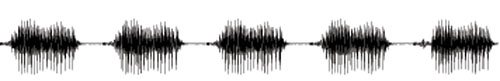 : speech wave