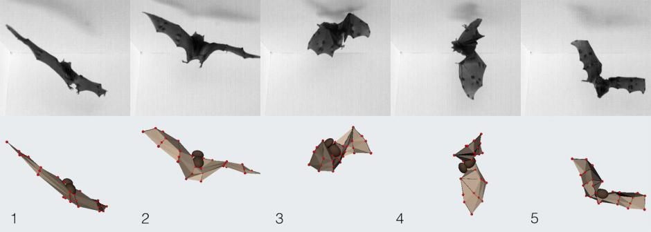 images of a bat flying