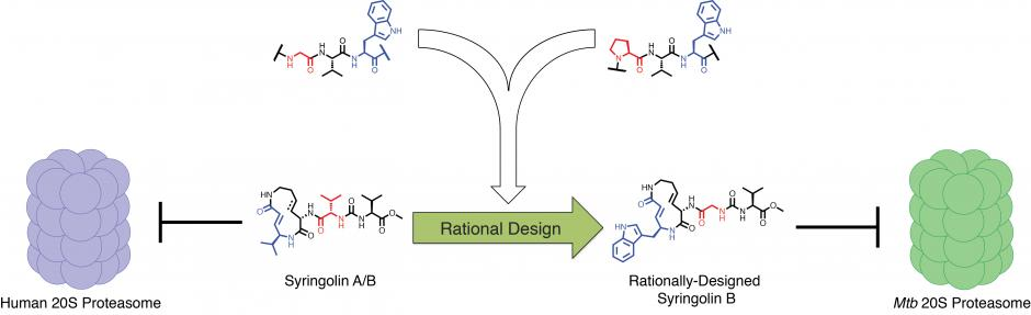 New Compound Targets Tb Bacteriums Defense Against The Immune