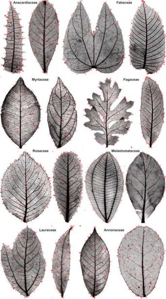 computer vision can help classify leaves news from brown